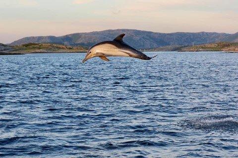 Tropisk delfin