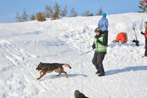 Politibetjent Ketil Reistad har hatt politihund som er godkjent lavinehund, altså en hund som søker etter folk i snøskred, i mange år.
