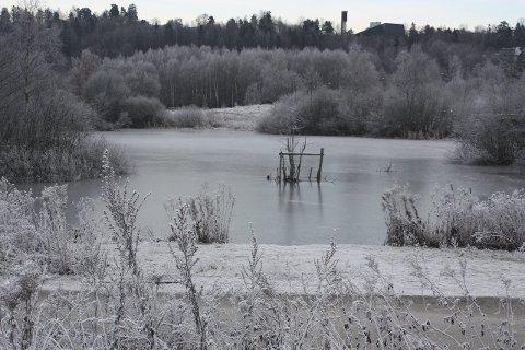 USIKKER IS: Foreløpig er ikke isen på Østensjøvannet sikker for andre enn måker og ender. FOTO: ARNE VIDAR JENSSEN