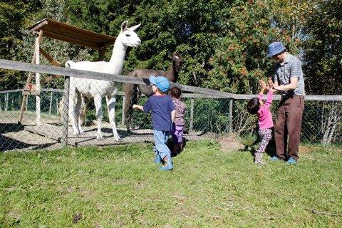 MAURTU GÅRD: De to lamaene Inka og Andes holder til på barnebondegården Maurtu Gård på Klemetsrud. Foto: Privat