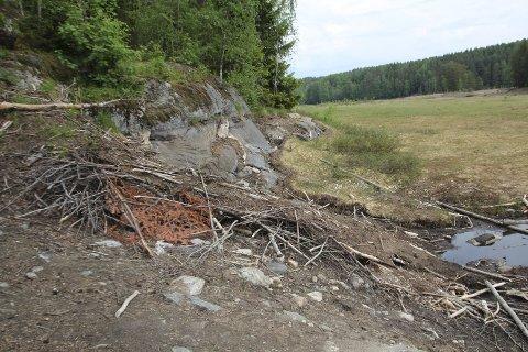 SØRLIMYRA: Det var like ved denne beverhytta ved Sørlimyra at Kjersti Eidem Dyrhaug fant den døde beveren. Foto: VAV