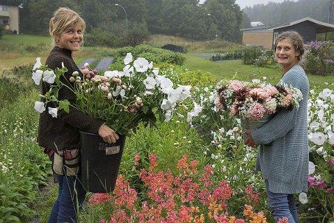 Bøttene fulle: Anja Bruland (til venstre) og Ida Tindeskog kan gå ut i Blomsterhagen og fylle bøttene med duggfriske blomster. Alle foto: Kari Kløvstad