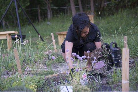 FELLES: Stine Jonsrud rydder i den felles hageflekken med urter, som alle har ansvar for og alle kan forsyne seg fra. Alle foto: Karen Gjetrang