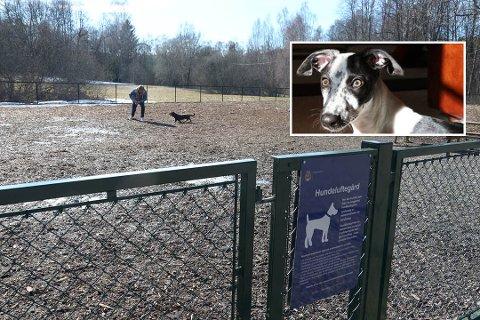 RØMTE: De fire hundene, inkludert Cava som fortsatt er savnet og er av samme type som hunden innfelt i bildet, rømte fra denne hundeluftegården.