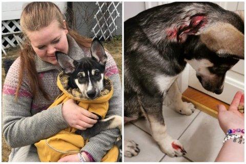 Marianne (19) og 13 uker gamle Coda ble angrepet av en stor hund som gikk løs da de gikk tur. Det er ikke båndtvang i Norge nå, men Marianne mener man må ta ansvar for hundene sine selv om.
