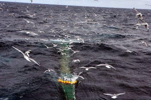 ANMELDT: I år har Kystvakten avdekket 44 alvorlige regelbrudd under fiske, som har endt i anmeldelse eller oppbringelse til norsk havn.     Ill.foto: Ole Åsheim