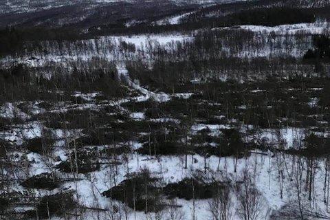 JEVNET MED JORDA: Store mengder skog ble jevnet med jorda i Salangsdalen da ekstremværet Ylva herjet for to uker siden.