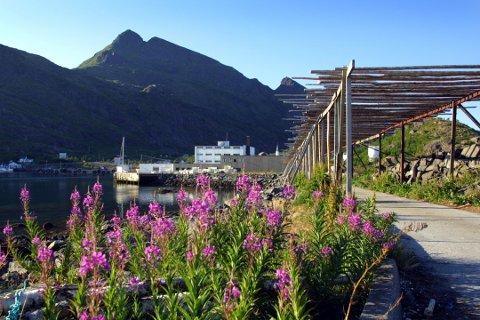 Moskenes ytterst i Lofoten er en av kommunene som får besøk av kongeparet denne uka. Arkivfoto: Gorm Kallestad / NTB scanpix