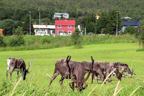 ANMELDT: Reineier på Kvaløya, Per Kitti, er politianmeldt av en beboer på Kvaløya. Arkivfoto: Bjørn Lockertsen