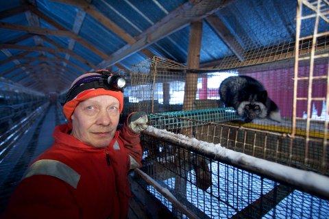 Levin Mikkelsen er den siste pelsdyroppdretteren i Troms og Finnmark. Nå vil regjeringen tvangavvikle næringa, og livsverket til Kåfjord-bonden. Foto: Ola Solvang