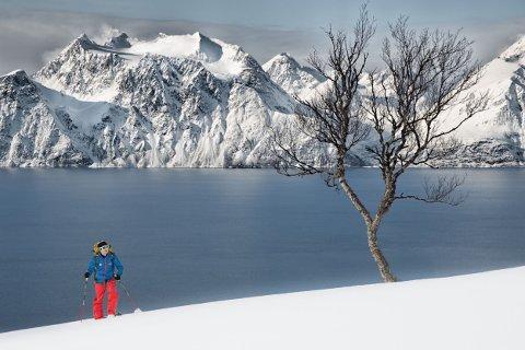 Graham Austick på vei opp et av fjellene ved Lyngenfjorden. Den erfarne skiguiden advarer mot toppturer og løssnøkjøring med hodelykt i mørketida. Snøforholdene er helt annerledes og farligere enn det man finner senere i sesongen. Foto: Privat