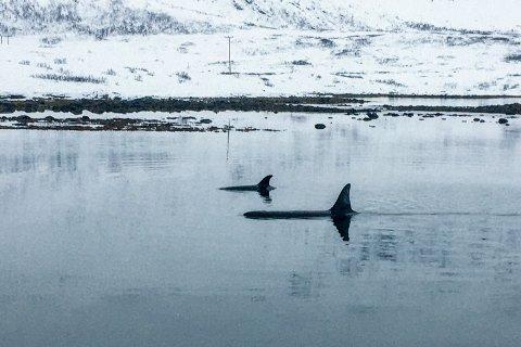 Foto: Jorunn Amundsen
