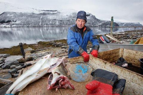 Nils Samuelsen slår alarm om dårlig fiskekvalitet i indre kåfjord. - Dette er flott torsk fra ytre del av fjorden. Det som lever innenfor terskelen kan ikke spises, mener fiskeren. Foto: Ola Solvang