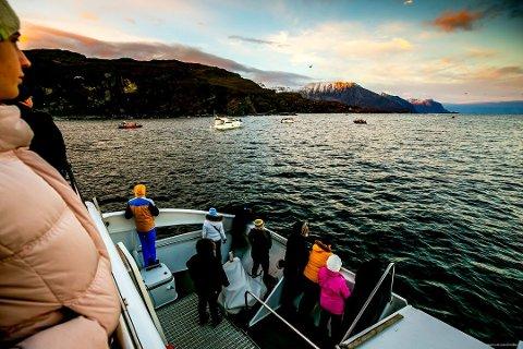 ØKNING: Nord-Norge opplever fortsatt stor økning på antall overnattinger i landsdelen. Bildet er tatt under en hvalsafari utenfor Skjervøy i fjor.