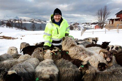 SMILER: Kurt Solheim sammen med noen av villsauene i den nye flokken. Etter tragedien i 2018 har han investert millionbeløp i gården.