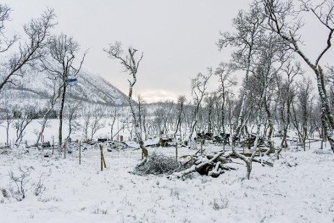HYTTEBRANN: Fem personer mistet livet i den tragiske hyttebrannen på Risøyhamn i Andøy kommune, natt til lørdag 16. januar. Foto: Jens André Mehammer Birkeland