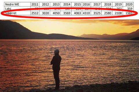 BEKYMRET: Her er tallrekka som bekymrer i Målselvvassdraget. Nedgangen i sjøørretfangsten er dramatisk sammenlignet med toppåret 2016. Her fra det populære fiskestedet Hollendernes ned mot utløpet av Målselva. Foto: Are Medby