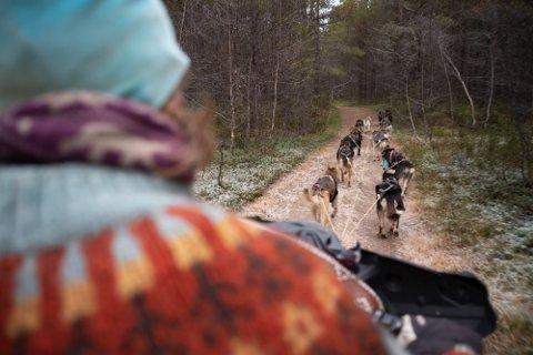 STANS: Sauebønder krever øyeblikkelig stans for hundekjøreraktiviteten i Kjellerskogen i Reisadalen.