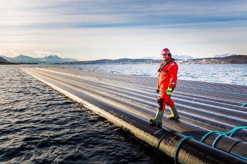 Sjøledningene mellom nordspissen av Tromsøya og fastlandet har blitt et økonomisk mareritt for Tromsø kommune. Nå vurderer kommunen søksmål mot staten, for å få dekket merkostnader for fjerning av gamle tyske granater.