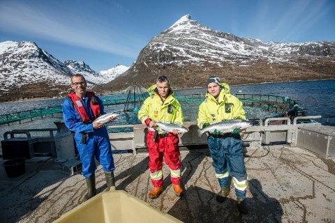 BRØDRE: Hansen og Hansen og Hansen gjør det godt. De tre brødrene bak Sjurelv Fiskeoppdrett i Kaldfjord skaper store ringvirkninger lokalt og regionalt.