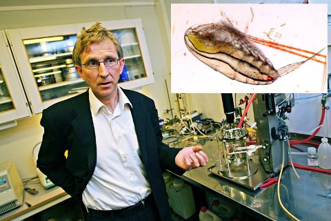 SER LYS FREMTID: Gunnar Rørstad, administrerende direktør i Calanus, leverer gode tall for 2016.