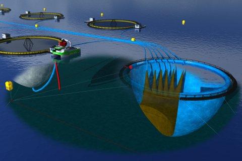 PATENTSØKT: Skissen viser et flytende lukka oppdrettsanlegg der inntaksvannet filtreres for lakselus og avfallsvannet i blå slanger blir ved utfelling av faststoff renset i en egen rensemerd til høyre i bildet. Her er det kun flytting av vann i vann som gir en energioptimal rensing. Rensemerden er patentsøkt av NOFI.