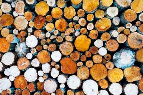 VEKST: I alt solgte skogeierne 2,7 millioner kubikkmeter tømmer i tredje kvartal, en økning på 17 prosent. Illustrasjonsfoto: Gorm Kallestad / NTB