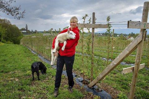 Fornøyd: – Bedre enn null, konstaterer leder Linda Suleng i Østre Toten Bondelag om kompensasjonen etter ulvesommeren.