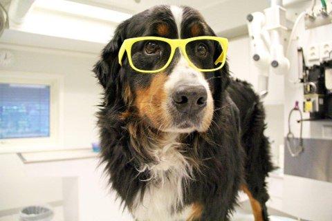 Husk pass til Passopp: En kjapp svensketur med hunden eller katten er ikke lenger lov. Nå må kjæledyrene fine seg i å bli utstyrt med eget pass og vaksiner.