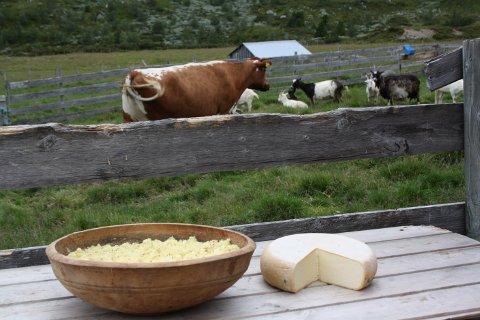 Ost og jazz er ingrediensene når Beitostølen inviterer til ostefestival denne helga. Foto: Kathrin Aslaksby