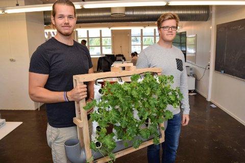 VERTIKAL DYRKING: Martin Molenar (t.v.) og Jo André Flåseth jobber med å utvikle vertikale anlegg for dyrking av planter. Her viser de fram en prototype med grønnkål.