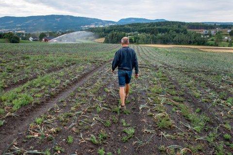 HARD SESONG: Mange bønder i Oppland fikk avlingene ødelagt av det varme, tørre været som preget sommeren 2018. Arkivbilde