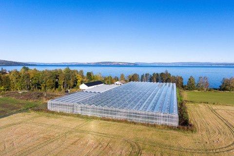 KJENT: Hammerstad-gården og gartneriet med det store glasstaket er et kjent landemerke. Familien har drevet gården i over 100 år.
