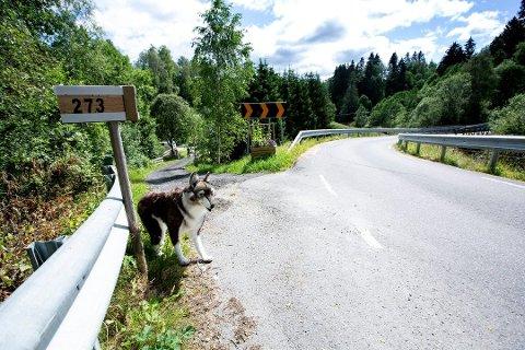 SATTE UT »HUND«: Morten Sanders er lei av det han kaller hensynsløs kjøring på Hjeravegen i Eidsvoll. For å få folk til å bremse ned, har han satt ut en hundelignende dukke langs veien.