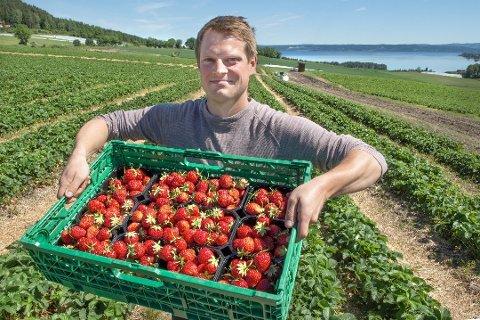 ANDRE SESONG: Per André Dyste (29) er i gang med sin andre sesong som jordbærbonde i Kolbu. Her på Østre Rognstad gård på Skreia der den første bæra vil være moden rundt Sankthans.