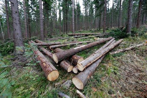 STOR SKOGEIENDOM: Den 21.800 dekar store skogeiendommen i Gjøvik og Søndre Land har en antatt markedsverdi på 20 millioner kroner.