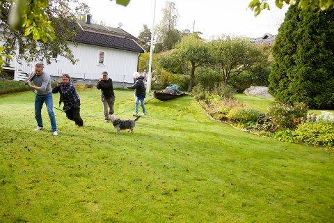 Etter at elgen ble avlivet, måtte fire personer trekke ham ut av hagen.