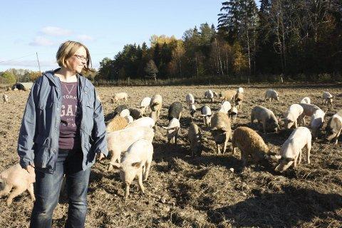 Det frie griseliv: Hos Hilde Hammer Aukrust på Søndre Oppegård lever julegrisene det glade, frie utelivet. Enn så lenge. FOTO: VIVI RIAN