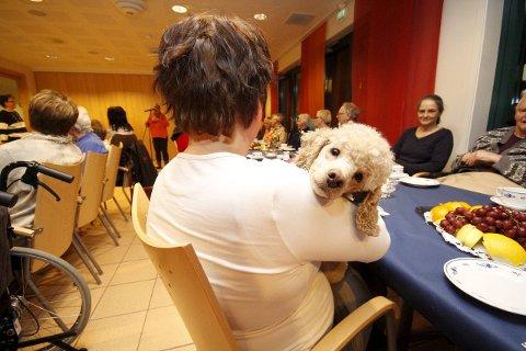 STORE OG SMÅ: Både store og litt mindre hunder gleder på Moer sykehjem. FOTO: STIG PERSSON