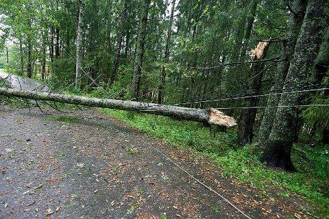 Her har et tre lagt seg over strømlinjene i Skotbu. Foto: Ole Kr. Trana