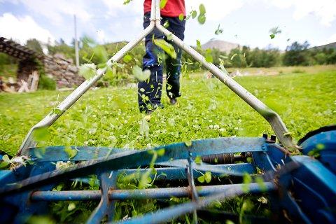 VANE: Mange bruker søndager til å klippe gresset. Det skal de få lov til i fremtiden også - uten å bryte loven, mener ansvarlig redaktør Martin Gray i dagens leder.