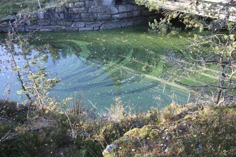 BLÅGRØNNALGER: I PURA er de ikke overrasket over at Gjersjøen ser sånn ut. Kombinasjonen av algeforekomst og årstid forklarer mye. FOTO: VIVI RIAN