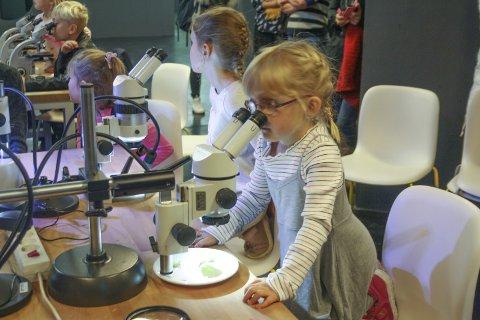 INN I DET USYNLIGE: Eva Johnsen Lübeck leter etter bladlus under mikroskopet. Vitenparken inviterte til workshop i anledning Forskningsdagene. FOTO: VIVI RIAN