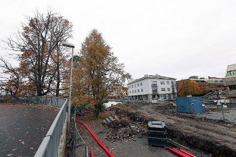 BLIR TIL VED: Fem trær i Jernbaneveien blir fellt i nær fremtid.