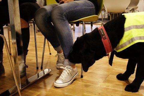 Ås ungdomsskole fikk besøk av politi med narkotikahund. Illustrasjonsfoto: Merete Granli