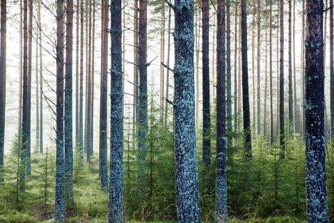 PRODUKTER FRA SKOGEN: Et nytt norsk-svensk prosjekt skal bidra til vekst og innovasjon basert på råvarer fra skogen.