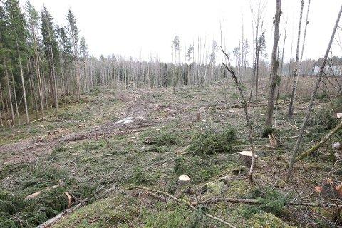"GRATIS: Hvis kommunen hugger mange trær på et begrenset område, blir veden liggende der, skiltet ""Gratis ved""."