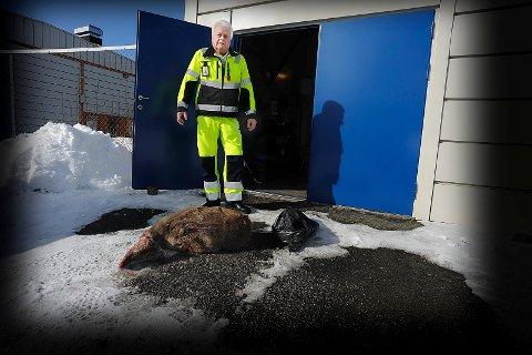TRAGISK: Egik Johannessen i viltnemnda i Ski synes det er tragisk at folk ikke melder fra og påkjørte dyr blir liggende og lide.