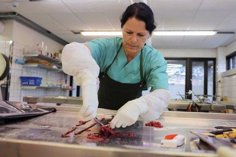 PÅ JAKT: Forsker og patolog Helene Wisløff ved Veterinærinstituttet på jobb søndag. Hun obduserte flere hunder som man mistenker er rammet av den fortsatt ukjente hundesykdommen. Minst 25 hunder er registrert døde i Norge etter å ha hatt blodig diaré den siste tiden. Har tas det prøver av blodet som ligger i tarmen. Blodet skal sendes til analyse.