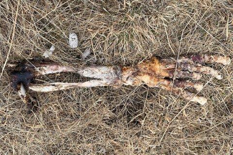OPPKLART: Dette lignet veldig på en arm fra et menneske, men det er det ikke.